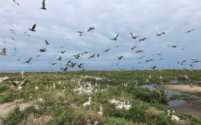 Use Case – Counting Over 4,000 Pelican Nests in 30 Minutes on Queen Bess Island, Louisiana, USA
