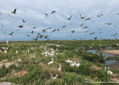 Use Case_Counting over 4,000 Pelican Nests in 30 Minutes on Queen Bess Island, Louisiana, USA